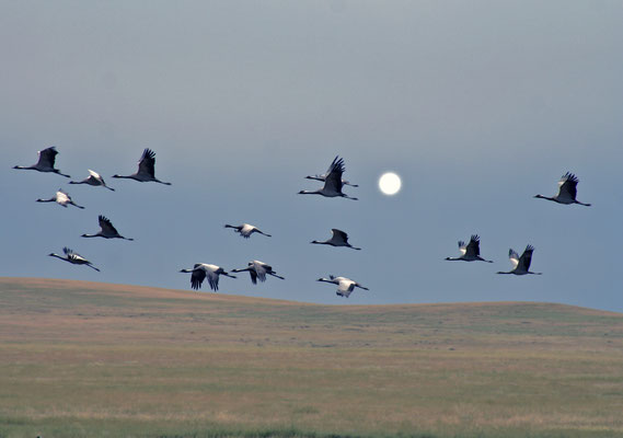 Vogelflug, Mongolei