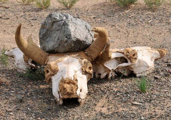 Mystisches in den Weiten der mongolischen Steppe