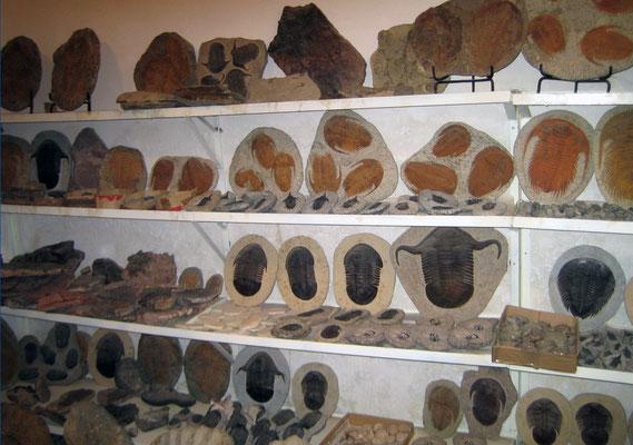 Fossilienladen in Erfoud