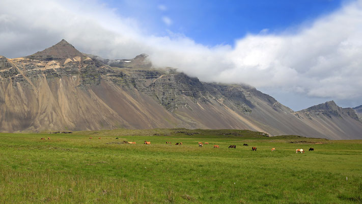 Islandpferde an der Süd-Ostküste