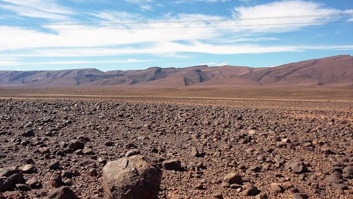 Hammada die Steinwüste