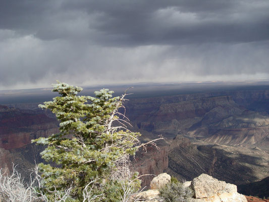 USA; Grand Canyon - North Rim