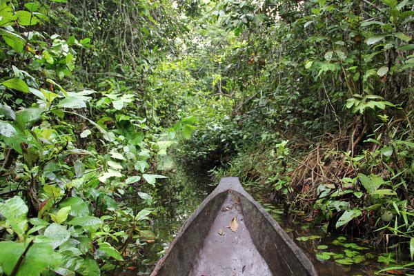 Zentralafrika und Kongo; Noubale Ndoki NP