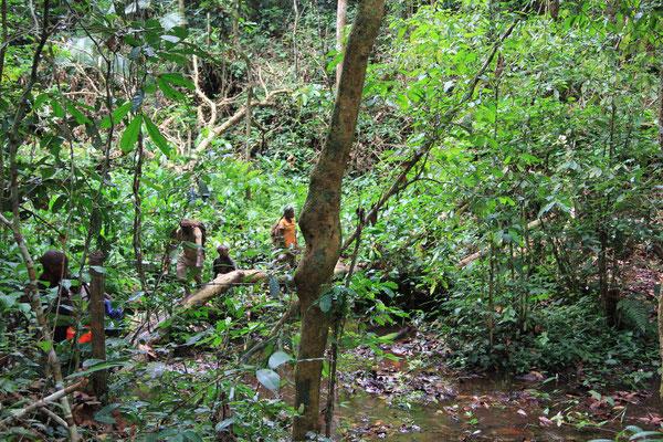 Zentralafrika und Kongo; Louis Sarno, Pygmäen