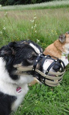 Biothane Maulkorb, Biothane, Beißkorb, Hundezubehör, Maulkorb, Biothane Beißkorb, Hundebeißkorb, Hundemaulkorb, Maulkorb für Hunde,