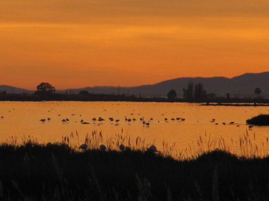 Sonnenuntergang und Wasservögel