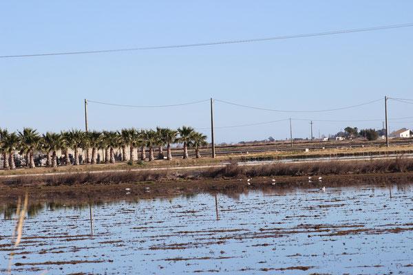 Felder, vermutl. Ansiedlung der Bauern, Palmen