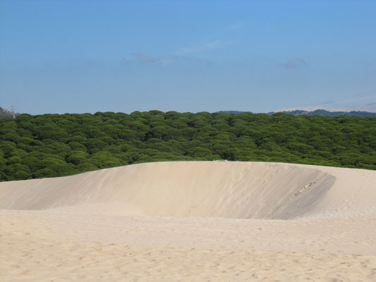 Sandmulden, geformt vom Wind