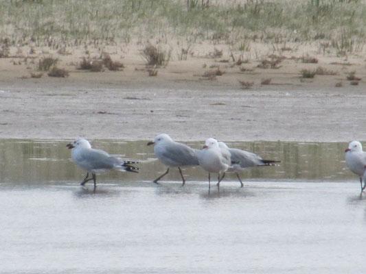 Wasservögel tummeln sich