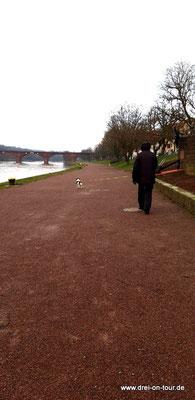 Spaziergang am Main entlang