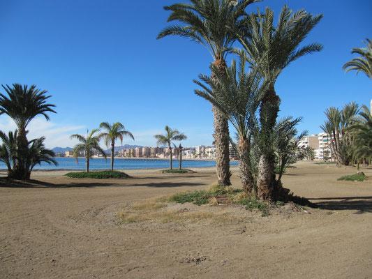 ein Augenschmaus - Strand mit Palmen