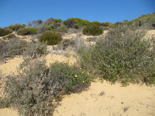 und Wüstenpflanzen