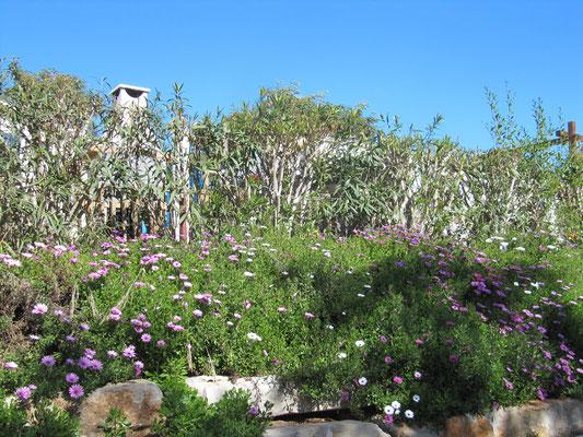 gepflegte Blumenrabatten auf dem CP