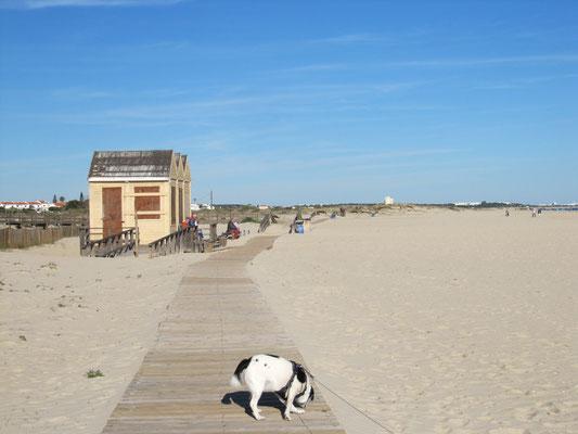 Holzstege führen über weitere Strecken am Strand entlang