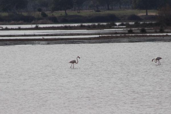 die hiesige Seenlandschaft gehört schon zum Donana-Nationalpark