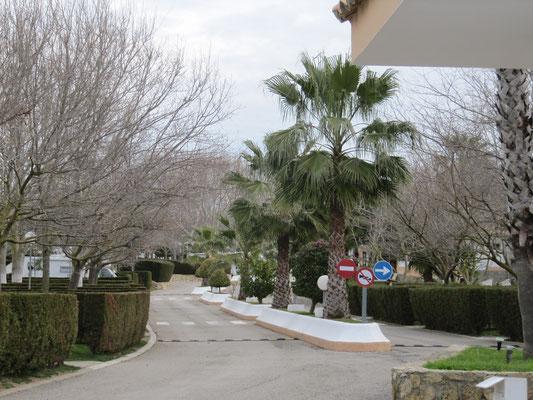 Blick von der Rezeption auf den CP La Rosaleda