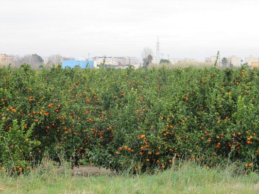 Orangenfelder