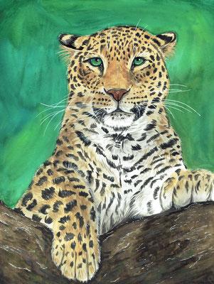 Amur Leopard - März 2021 - A3