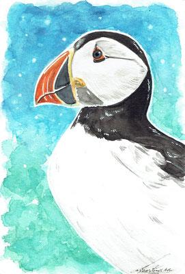 Puffin/ Pinguintaucher- Mai 2020 - A6