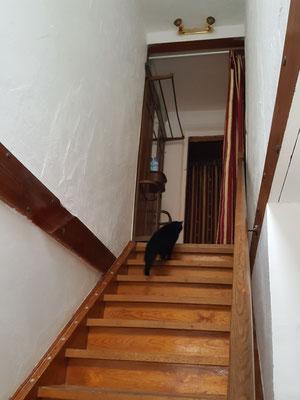 Treppenhaus vom EG in das erste OG.