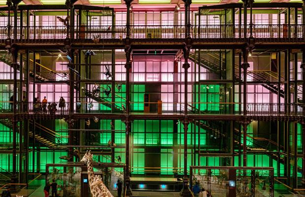 Grande Galerie de l'Evolution (Jardin des Plantes - Paris)