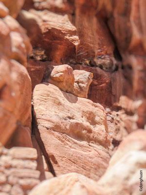Le baiser de Pétra -  Vallée du Wadi Farasah