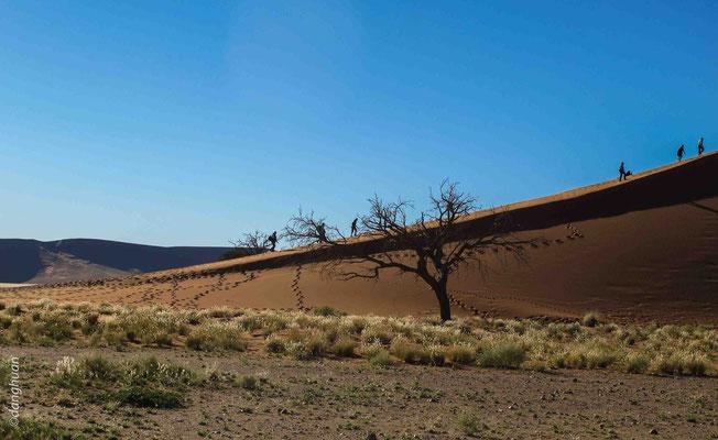 La couleur rouge des sables est due à la présence de trioxyde de fer (fer ferrique : Fe2O3)