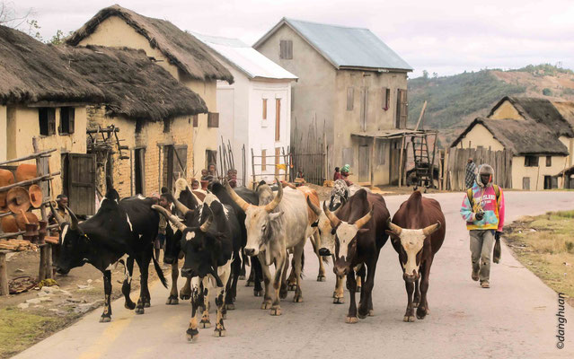 entre Ambositra et Ranofarama