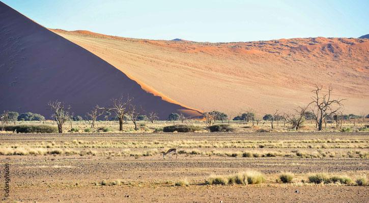 Sossusvlei  - Les dunes s'élèvent à plus de 375 mètres