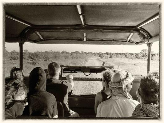 Safari au parc national d'Estosha