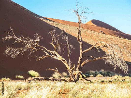 Ces sables proviennent de l'érosion de grès anciens