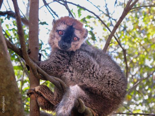 Lémur (Parc national de l'Isalo, Madagascar)