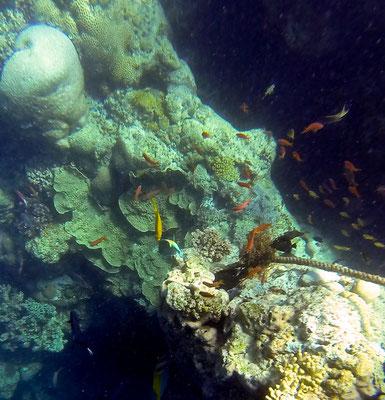 Celebes-See / Pulau Mataking