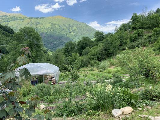 南フランス ハーバリストのためのハーブ研修 ピレネー山脈