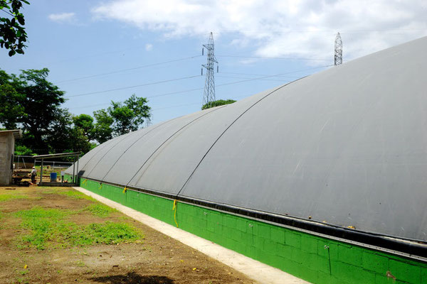 Lagoon digester for manure
