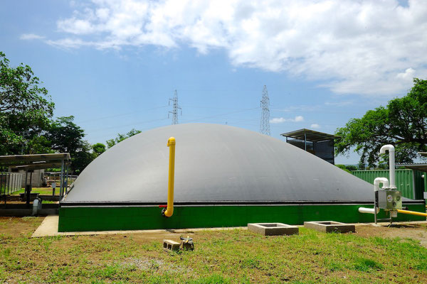 Covered lagoon digester for dairy cattle manure - digester for livestock waste