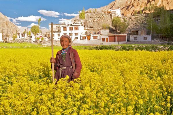 Ladakhi Bäuerin