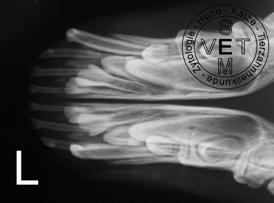 Röntgenbild Unterkiefer okklusale Sicht