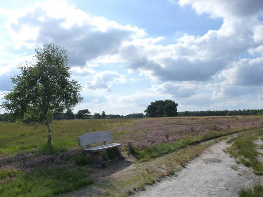 Rast in der Lüneburger Heide, Deutschland