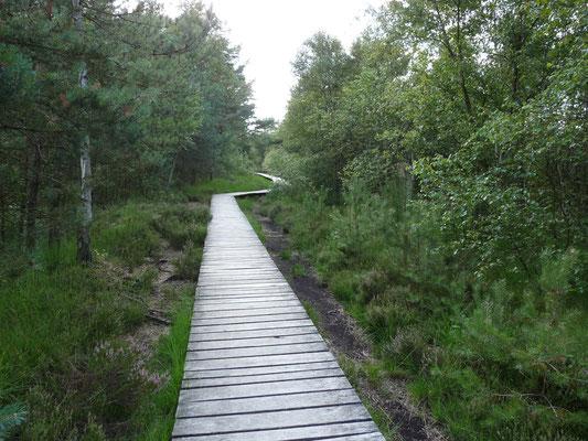 Der Weg durch das Moor, Pietmoor, Lüneburger Heide, Deutsvchland