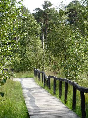 Der Steg zum Moorsee, Pietzmoor, Lüneburger Heide, Deutschland