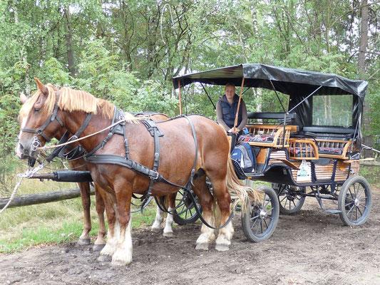 Kutschfahrt in der Lüneburger Heide, Deutschland