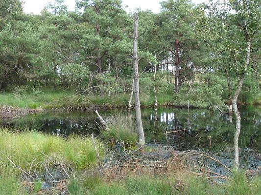 Das unergründliche Moor, Pietzmoor, Lüneburger Heide, Deutschland