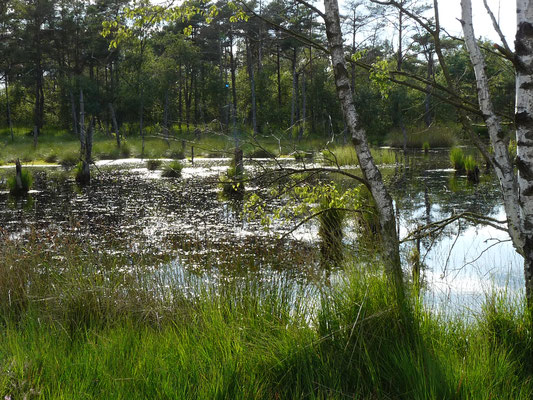 Schwarzer Moorsee im Pietzmoor, Lündeburger Heide, Deutschland