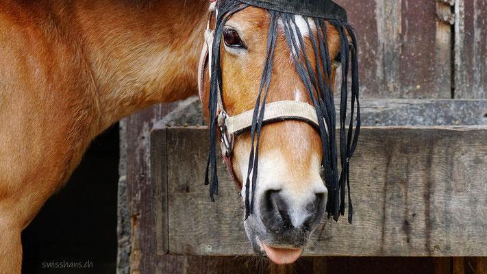 Pferdekopf vor braunem Stall