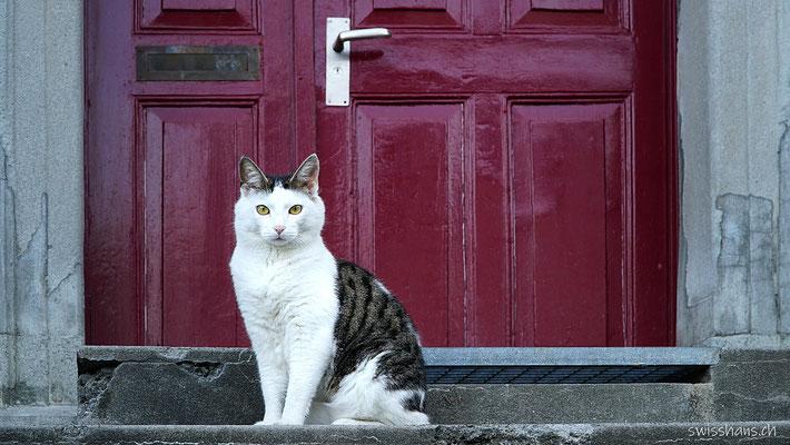 Katze vor einer roten Türe in Berneck