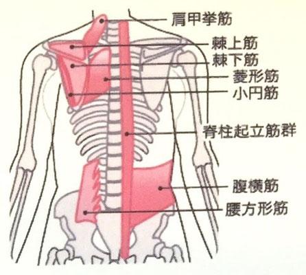 肩甲骨付近の筋肉