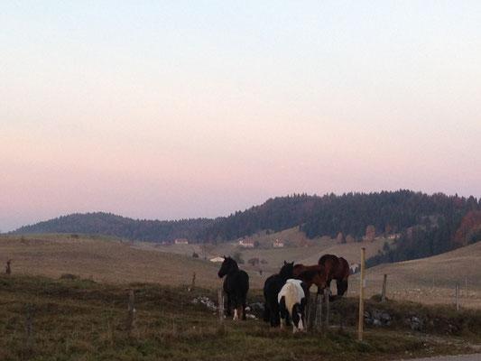 Le silence et les chevaux
