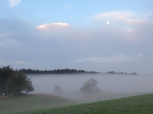 Petite brume du matin