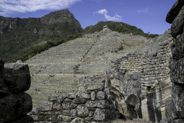 Inka-Terrassen für den Anbau von Feldfrüchten wie:  Mais, Kartoffeln, Quinoa, Amarant, Kürbis, Tomaten, Erdnüsse und Paprika